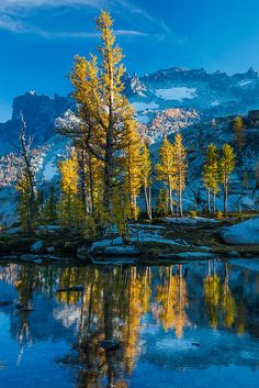 tulipnight:  Alpine Larch at Peak Color along Leprechaun Lake by Lee Rentz on Flickr.