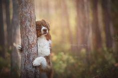 Anne Geier preciosas fotografias perros 7