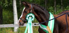 Warmblood Horses, Animals, Animales, Animaux, Animal, Animais