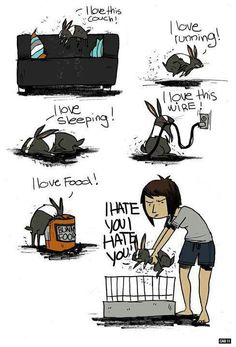 Het leven van een konijn in een notendop