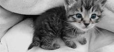 Stiekem een dekentje op de verwarming leggen voor je kat? Herkenbaar ;) | newsmonkey