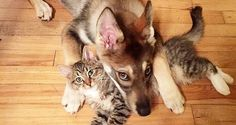 Dog Picks Out Her Very Own Shelter Kitty to Be Her Best Friend