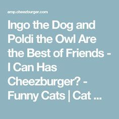 Ingo the Dog and Poldi the Owl Are the Best of Friends - I Can Has Cheezburger? - Funny Cats | Cat Meme | Cat Pictures
