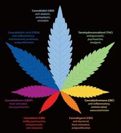 How parts of marijuana help
