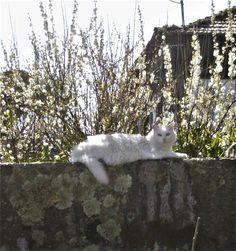 Floco the cat