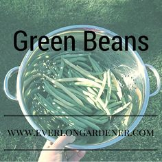 Beans are one of best money saving crops to grow in your garden.
