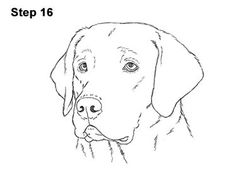 Dog Face Drawing, Dog Drawing Simple, Animal Sketches, Animal Drawings, Drawings Of Dogs, Dog Sketches, Dog Drawing Tutorial, Arte Sketchbook, Dog Crafts