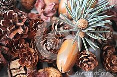 Fir branch and cones stock image. Image of decoration - 106601505 Fir Cones, Acorn, Fruit, Vegetables, Decoration, Image, Decor, Tassel, Vegetable Recipes