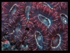 Amazing Corals at AquariumDepot.com - Coral Bin - under $9.99 - photo by Christina Duncan - License = Attribution / 8.1.2016  #corals #hardcorals #zoas #rarecorals #saltwateraquarium