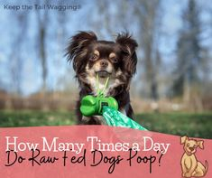 How Many Times a Day Do Raw Fed Dogs Poop? | Keep the Tail Wagging Animal Nutrition, Pet Nutrition, Cute Dog Photos, Dog Games, Can Dogs Eat, Dog Care Tips, Pet Health, Dog Training, Animals And Pets