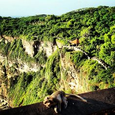 #bali 2010 #Uluwatu #landscape #monkey #colors #green #beautiful - @emmegielle- #webstagram