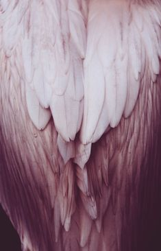 Bird feathers in soft pink