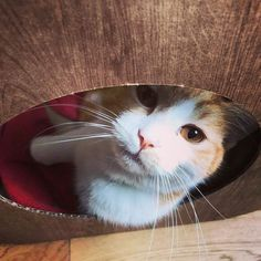 Awwwww Sprout is adorable  we're so pleased he likes his pod  #cat #catsofinstagram #cats_of_instagram #catfurnature #catfurniture #catsinboxes #cattoy #INSTACAT_MEOWS #cutecat #PurrMachine #catsinboxes #catbox #Excellent_Cats #BestMeow #dailykittymail #thecatniptimes #catcube #catpod #ArchNemesis #FlyingArchNemesis #myindoorpaws #ififitsisits #cutecatcrew #catchalet #catnip #themeowdaily #kitty #dailykittymail #catgrass