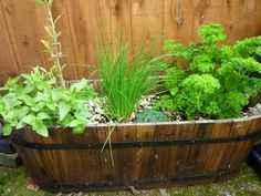 Becoming an Herbalist with Your Own Medicinal Herb Garden