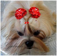 Hairstyle Dog - Model: Shih Tzu Lólly