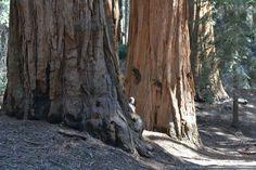 Самые большие и удивительные деревья - http://bigcities.org/?p=11170