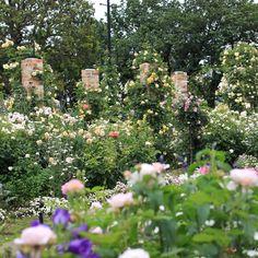 garden,yokohama,港の見える丘公園