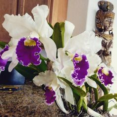 Thanksgiving orchid bloom.