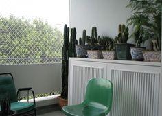 cacti in the balcony