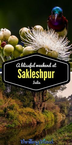 Sakleshpur - A Blissful Weekend Getaway from Bengaluru - Thrilling Travel India Travel Guide, Asia Travel, Amazing Destinations, Travel Destinations, Travel Tips, Travel Advice, Vacation Travel, Travel Guides, Taj Mahal