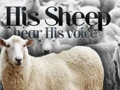 Sermon Powerpoint Illustration on Discipleship - His Sheep Powerpoint - SermonCentral.com