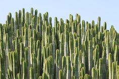 Cactus, Planta, Estimular, Espinoso