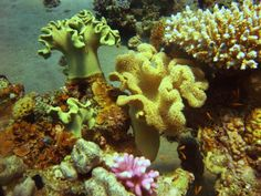 reef splendido
