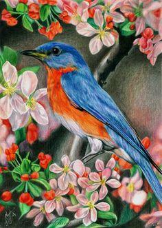 Рисунок цветными карандашами: «Птица в цветах» Фотобумага А4, цветные карандаши MARCO Raffine.