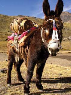 ♥   Donkey   ♥
