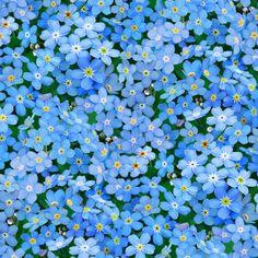 Designerstoffe USA - VERGISSMEINNICHT, Blumen, Bw Stoff - ein Designerstück von ABC-Designerin bei DaWanda