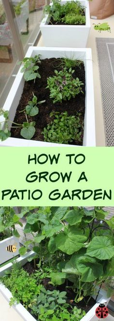 Growing a patio garden is as easy as setting up a self-watering planter box and…