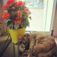 Kya the cat