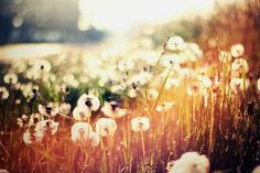 #sun #flowers