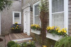 Spring window boxes  // Great Gardens & Ideas //