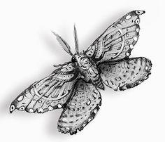 Moth tattoo design by TheGremlinCat