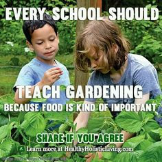 medicinal-plants-herbs:I wholeheartedly agree with this….it should be taught in every school
