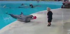 Sociolatte: Just a dolphin and a kid playing ball