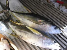 Yellowfin tuna supplier produces various products to their customer within the markets. They can manage to deliver high quality exported products for yellow tuna along with other species of tuna such as skipjack and albacore. Yellowfin itself marketed as 'light tuna' under canned, fresh, frozen, steaks, fillets, and pouches. Yellowfin number 1 quality usually distributed to Japan market, while quality number 2 is enough for US market.