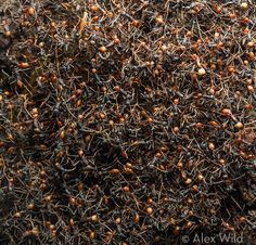 Know what will cheer you up? Ants. Lots of ants.