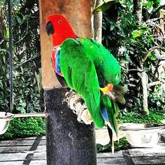 Bali Bird Park, Bali