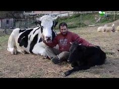 La nueva vida de unos cabritos que iban a morir - YouTube