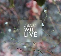 you will live // amos 5:4