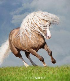 Comanche, PRE stallion by ~carlinusje on deviantART