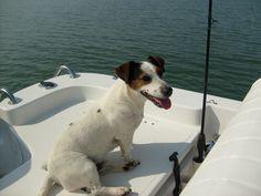 Looks like she's ready to go boating! www.wholesalemarine.com #boating, #pet, #dog, #wholesalemarine