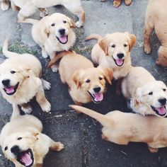 happy pups
