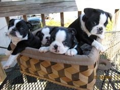 Aww I wish a basket of these puppies would end up on my doorstep!