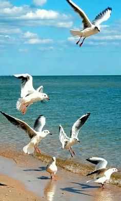 flag of Ocean Simply breathtaking - sea life Sea Birds, Love Birds, Beautiful Birds, Animals Beautiful, Photos Voyages, Seascape Paintings, Landscape Paintings, Beach Scenes, Beach Art