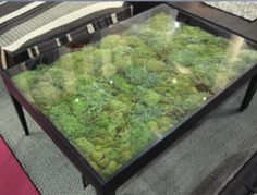 moss inside a table