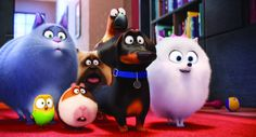 Secret-Life-of-Pets-movie-still-e1467906088510.jpg (800×431)