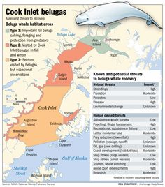 My All About Beluga Whales Book - (Arctic / Polar Animals) from ...